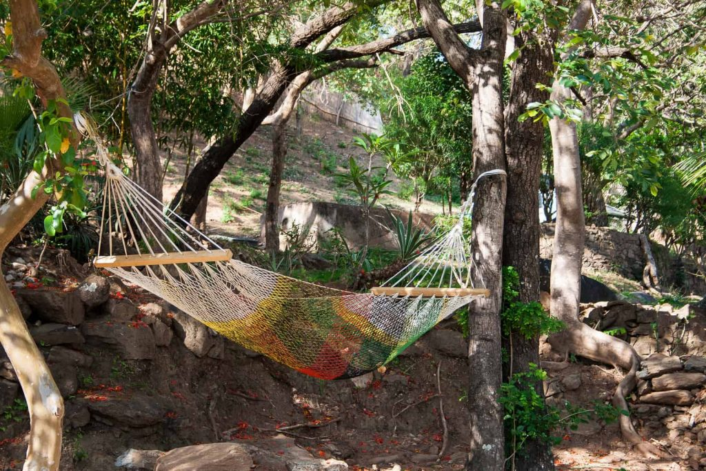 hammock bug net in the middle of the woods