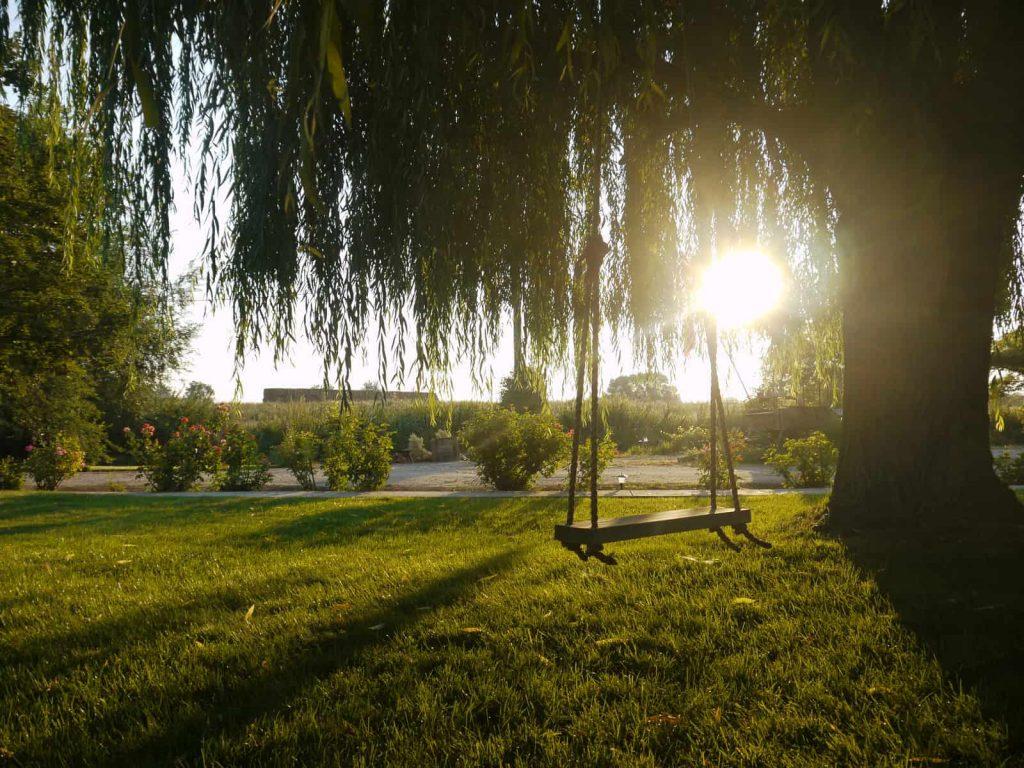 hanging tree swing in greenery outdoors