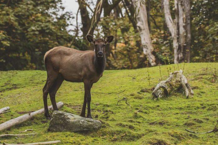 elk hunting gear