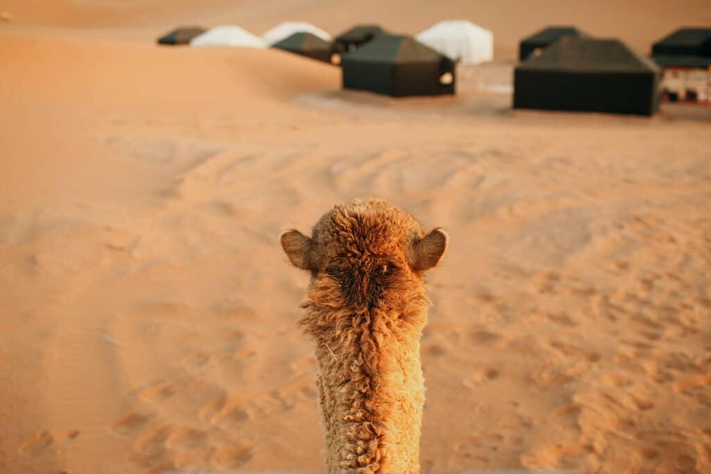 good tent for desert camping